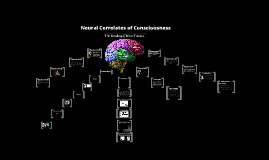 Copy of Neural Correlates