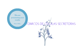 secresion acida