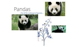 Pandas :3