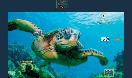 Copy of Green Sea Turtles