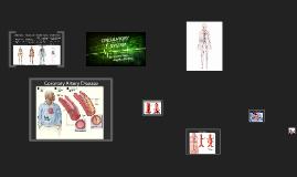 Copy of Circulatory System