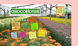 ASOCOLPFLORES