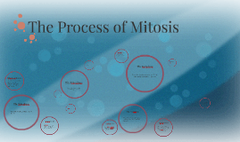 The Process of Mitosis