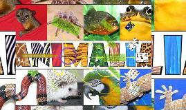 Copy of  ANIMALES VERTEBRADOS