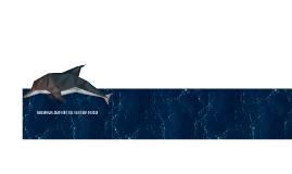 BOUDEWIIN SEAPARK | DOLFINARIUM BRUGGE