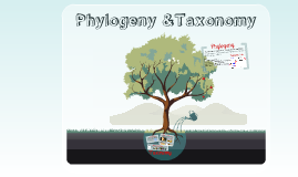 Phylogeny and Taxonomy