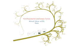 Copy of Northwestern Coniferous Forest