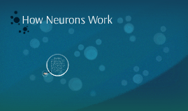 How Neurons Work