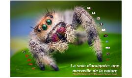 La soie d'araignée: une merveille de la nature
