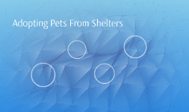 Adopting Pets From Shelters