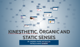 Copy of KINESTHETIC, ORGANIC AND STATIC SENSES