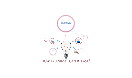 Copia de HOW ANIMAL CAN BE FAST?