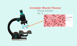 Anatomy: Muscle Tissues