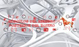 Copy of MIEMBRO POSTERIOR DEL EQUINO
