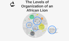 Copy of The Levels of Organization of an African Lion