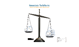 Homeostasis: Reflex Arc
