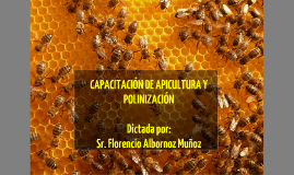 Copy of Las abejas: interesantes y fundamentales interacciones biológicas.