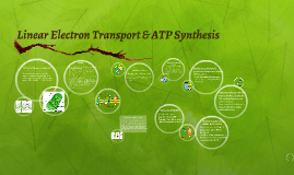 Copy of Linear Electron Transport & ATP Synthesis