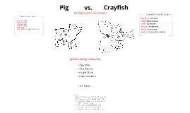 Pig vs Crayfish