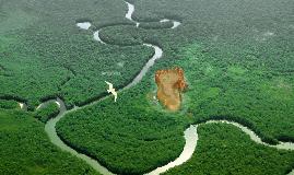 Copy of AMAZONIA