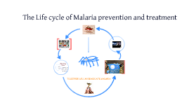 malaria nets vs drugs
