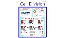 AP Bio:  Mitosis