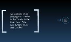 Biome Project - Tundra