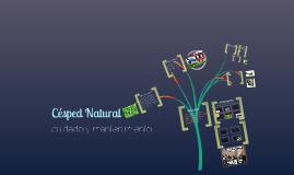 Césped natural - cuidados y mantenimiento