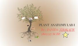 PLANT ANATOMY LAB I by Dao Panida on Prezi