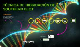 TÉCNICA DE HIBRIDACIÓN