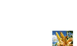 Democracia agroalimentaria