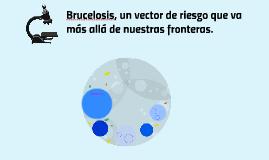 Brucelosis, un vector de riesgo que va más allá de nuestras