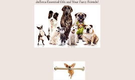 doTerra for Dogs