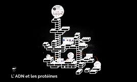 ADN et les protéines