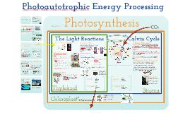 Unit 2.4 Photoautotrophic Nutrition