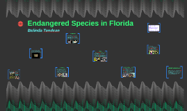 Endangered Species in Florida