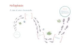 Metaphase