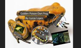 Lucas - Golden Poison Dart Frog