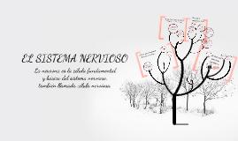 Copy of Copy of El sistema nervioso