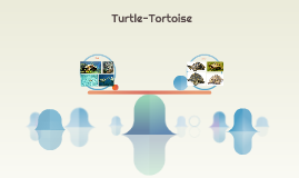 Copy of Turtle-Tortoise