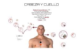 CABEZA Y CUELLO
