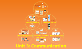 Unit 3: Communication
