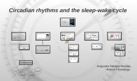 Circadian Rhythms and the sleep-wake cycle