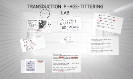 TRANSDUCTION: PHAGE- TITTERING LAB