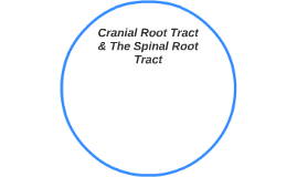 Cranial Root Tract & The Spinal Root Tract