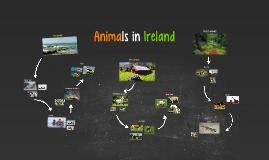 Animals in Ireland