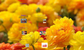 Copy of Floral Designer