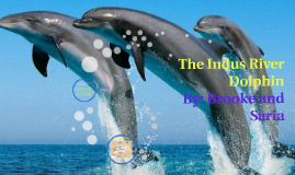 Copy of The Indus River Dolphin