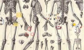 Copy of Skeletal System