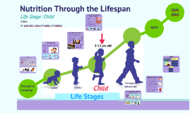 Copy of Nutrition Through the Lifespan